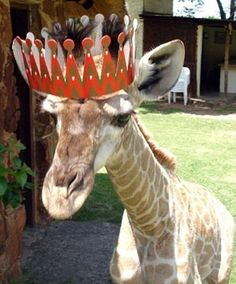 Happy birthday @Jasmine Varela !!! This giraffe is celebrating for you. :)