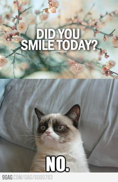This makes me think of my retail working days: When I'm in a bad mood at work and a customer tells me to smile...I feel like this cat :)