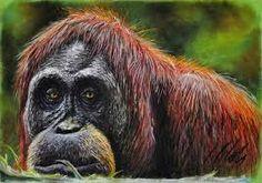 Resultado de imagen para cuadros de orangutanes