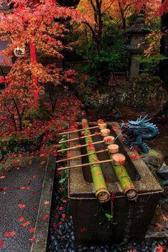 #momiji #Japan