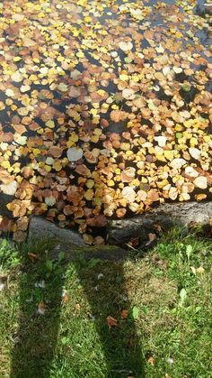Schatten Firewood, Stepping Stones, Texture, Outdoor Decor, Crafts, Home Decor, Shadows, Surface Finish, Woodburning