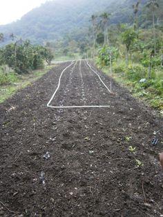 9月30日,冬季就是開始了,所以農地主殷勤地整地。畢境,一年當中,也只有這個時候,可以吃到自己種植的鮮嫩菜蔬。