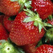 Biting into a bright red strawberry should bring a juicy, sweet sensation to your taste buds. But looks can be deceiving, and a perfect-looking strawberry can greet you with a watery, sour taste. Knowing what factors turn a growing strawberry from sweet to sour can help you keep your strawberries tasting their best.