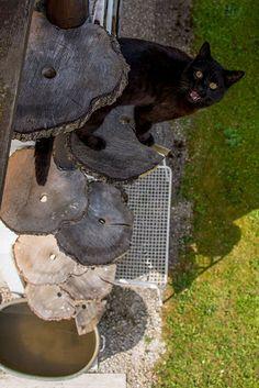 Cat Ladder Blogspot. Love this Outdoor Cat Ladder...
