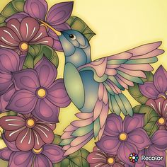 Love this hummingbird!! Isn't it gorgeous 😙😙😙😙😙😙😙😙😙😙😙😙