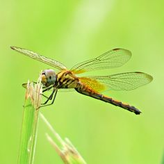20161127_133701eip - A #Dragonfly shot close to #CommonwealthMRT station #Singapore