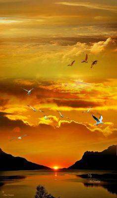 Amazing sunset shot by Tivadarné Csereklyei sun sky clouds birds yellow orange red reflection nature sunrise Beautiful World, Beautiful Places, Beautiful Pictures, Amazing Sunsets, Amazing Nature, Sunset Photography, Landscape Photography, Amazing Photography, Photography Tips