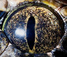 Animal Eyes - Python