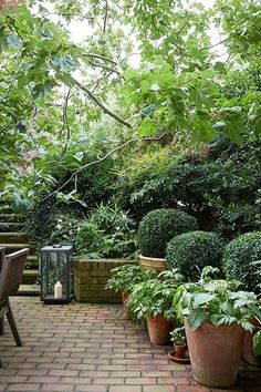 For A Super Cool Backyard Foliage and Fig Trees - Small Garden Ideas & Design (.uk)Foliage and Fig Trees - Small Garden Ideas & Design (. Small Courtyard Gardens, Small Courtyards, Back Gardens, Small Gardens, Courtyard Design, Courtyard Ideas, Patio Design, Brick Courtyard, Exterior Design