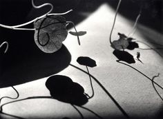 Ernst Haas • Leaves and Shadows