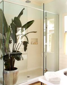 master bath with large plant inside glass shower door Bathroom Plants, Bathroom Sets, Master Bathrooms, Small Bathrooms, White Bathroom, Beautiful Bathrooms, Tropical Bathroom Decor, Tiled Bathrooms, Paris Bathroom
