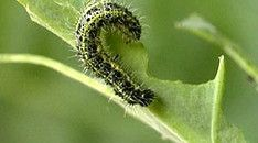 Van ei tot vlinder Very Hungry Caterpillar, Fauna, Dandelion, Animals, School, Butterfly, Spring, Kindergarten, Insects
