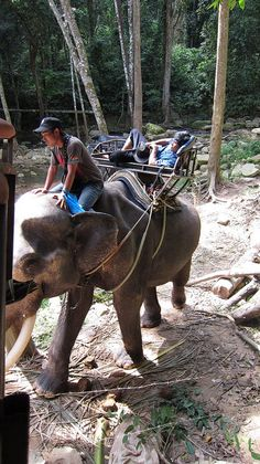 Elephant trekking on Koh Samui- will need to research an ethical company