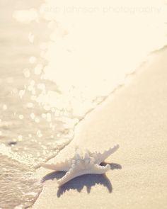 beach photography starfish