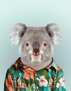 Zoo Portraits wall decals by BLIK combine photography with fashion illustration where artist Yago Partal's photos of animals are dressed up in human clothing.