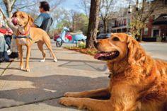Pet-Friendly Restaurants and Parks in St. Louis - St. Louis Magazine