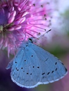 Butterfly's Lunchtime