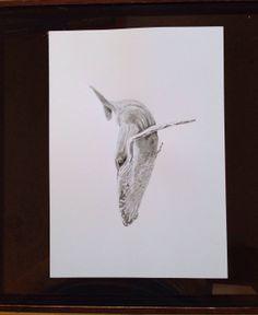 Humpback whale illustration. PRINT on Etsy, £10.00