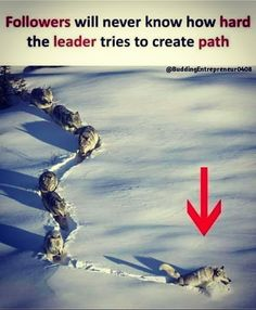 Leader's hardwork – Humor Funny Wisdom Quotes, True Quotes, Motivational Quotes, Inspirational Quotes, Motivational Pictures, Lone Wolf Quotes, Pictures With Deep Meaning, Meaningful Pictures, Science Quotes