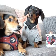 "Crusoe the celebrity dachshund — ""Now until Valentines, 15% of all sales -..."