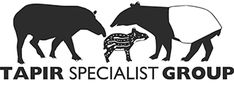 Working to Save Wild Tapirs from Extinction Living Fossil, Habitat Destruction, Animal Species, Fruit In Season, Predator, Southeast Asia, Vulnerability, South America, Mammals