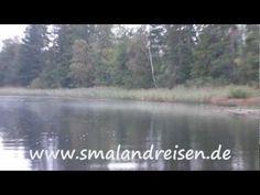 Eine Elchsafari mal ganz anders. Angler beobachten einen schwimmenden Elch im schwedischen Ruskensee während Sie nach Barschen jagen.