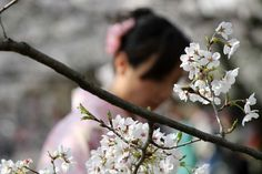 Viaggi nel Cassetto Pensieri sparsi sul Giappone - Viaggi nel Cassetto
