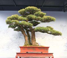 http://bonsaibark.com/wp-content/uploads/BC14.jpg