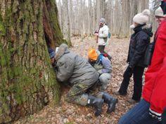 what is inside rotten tree ?