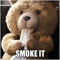 memes graciosos frases results - ImageSearch Ted Meme, Ted 2, John Bennett, Texts From Last Night, Psy Art, Puff And Pass, Chef D Oeuvre, Universal Pictures, Smoking Weed
