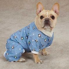 Casual Canine 08 19 Blizzard Buddies Pajama for Dogs, XX-Small Blue >>> For more information, visit image link. (This is an affiliate link) Dog Pajamas, Pet Beds, Pet Clothes, Dog Supplies, Beautiful Dogs, Small Dogs, Small Small, Best Dogs, Pugs