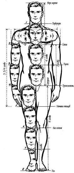 Image result for пропорции тела рисунок