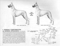 Great Dane Standard Animal Medicine, Medicine Book, Great Dane Breed, Great Dane Facts, Doberman, Pets, Dog Breeds, Animals, Group