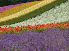 FARM TOMITA, 2006. | Flickr - Photo Sharing!