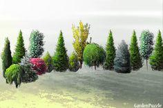 tylny żywopłot 13VII2012 - GardenPuzzle - projektowanie ogrodów w przeglądarce