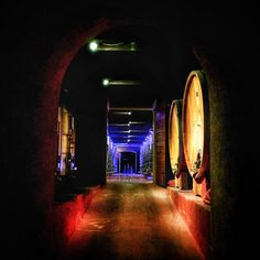 Wine Pictures - VigneNote Winery - Franciacorta - My Instagram