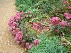 Sedum Robustum Ruby Glow Foliage Pinterest
