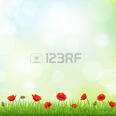 Red Poppy And Grass Border Vector Background Stock Vector