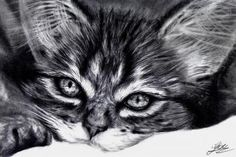 how to draw a realistic kitten, cute kitten