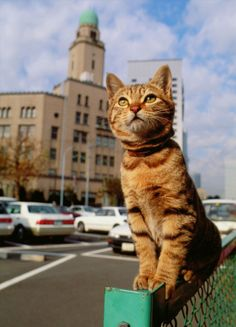 By 岩合光昭/ Mitsuaki Iwago, I like this cats photographer
