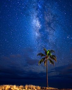 Scott Reither Photographer: South of Lahaina, I found a palm tree where I could create some space between it and I, in line with the Milky Way, while keeping the composition clean and simple.  The added challenge was that the road lie in between us!  Waiting for 25 second gaps in traffic, I was finally rewarded with this image of a lone palm and the Milky Way, while oncoming cars added a perfect light source to the palm and shore-side grass.