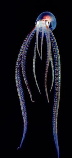 Criaturas inacreditáveis do fundo do mar - parte 2
