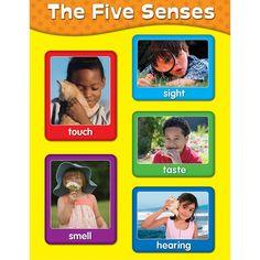 The 5 Senses Chart (Set of 3)