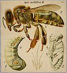 Entomology and Phytopathology Wall Charts