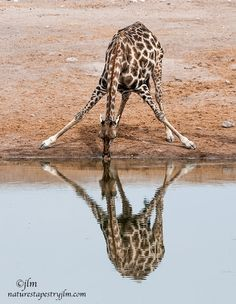 Reflections !!!!!! by Judylynn Malloch on 500px