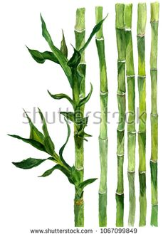 Стоковая иллюстрация «Bamboo Isolated Illustration Watercolor On White Bamboo Tattoo, Flower Painting, Image Illustration, Digital Flowers, Watercolor Flowers, Painting Art Projects, Bamboo Art, Chalkboard Drawings, Watercolor Illustration