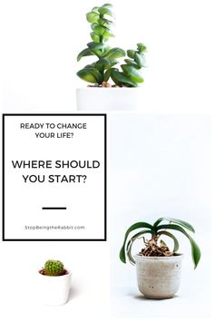 Ready to stop killing your succulents & keep them alive? Check out our tips to keep succulents alive. We love our succulent garden but it took a lot of practice to keep them alive. Get the tips to become a succulent pro right now! Way To Make Money, Make Money Online, How To Make, Money Today, Herbal Remedies, Natural Remedies, I Am Statements, Cool Plants, Unusual Plants