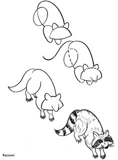 How to draw a raccoon.