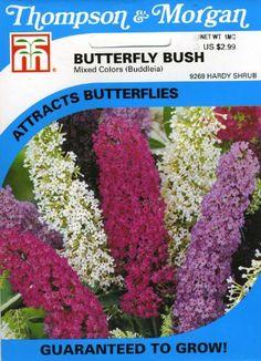 http://tcsmithinn.com/thompson-morgan-9269-butterfly-bush-mixed-colors-buddleja-seed-packet-p-10273.html?zenid=17654367b64d083e023335939c89946f