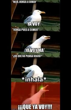 Jakajkajajajjakaja always me and my brothers jajjaj – Memes Funny Spanish Memes, Funny Relatable Memes, Funny Quotes, Stupid Funny, Hilarious, Mexican Memes, Northwestern University, Animal Jokes, New Memes